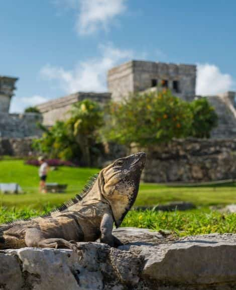 Image related to the last tip dedicated to Tulum destination